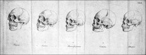 Dibujos de Blumenbach, II .