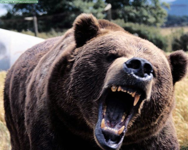 oso despierta